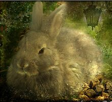 The Magical Hare by Crista Peacey