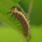 Red Postman Caterpillar by Lindie