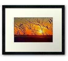Sunset through the bushes Framed Print