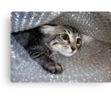 Mikino - Bubble-wrapped 2 Canvas Print