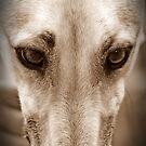 Gemma - peanut butter thief by GreyhoundSN