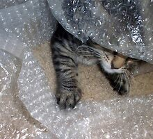 Mikino - Burrowing in Bubble-Wrap by Jaeda DeWalt