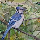 BLUE JAY - water color by Marilyn Grimble