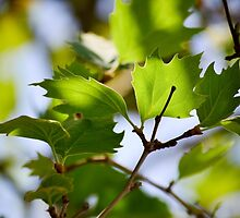 Leaves in Athens by bennoarts