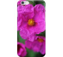 Sun rose (Helianthemum) iPhone Case/Skin