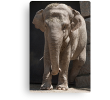 elephant at the zoo Canvas Print