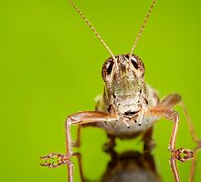 The Beauty of Insects by Dan Dexter by Dan Dexter