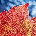 Fall Maple Leaf by Dan Dexter