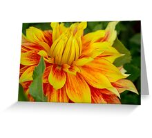 Flame Thrower Dahlia Greeting Card