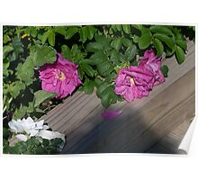 Roses along the Way Poster