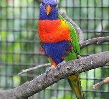 Pretty Birdie by Robin Raible
