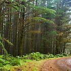 Misty Drive by Malcolm Katon