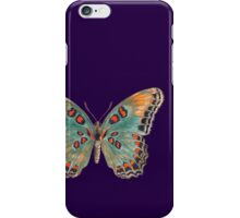 Limenitis Astyanax-The Red-Spotted Purple iPhone Case/Skin