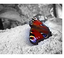 Beautiful Colorful  Butterfly - Nature Photography by JuliaRokicka