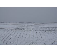 Winter Farm Fields - Rolling Hills on a Bleak Snowy Day Photographic Print