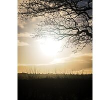 Winter sunlight through the bare branches Photographic Print
