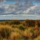 Dune Grass. by Bette Devine