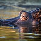 Dusk and the Hippopotamus  by John Conway