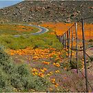 ON THE WAY TO CONCORDIA, NAMAQUA SOUTH AFRICA by Magaret Meintjes