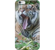 tiger at the zoo iPhone Case/Skin