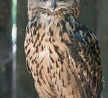 owl in the mountains by spetenfia