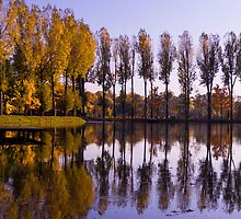 Line of Trees - Nature Photography by JuliaRokicka