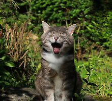 Laughing cat by turniptowers