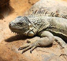 Mary iguana by smook