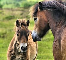 Exmoor Pony and Foal by judeatkins