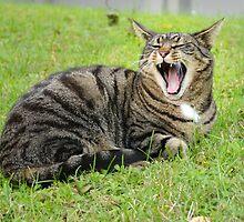 Yawning Cat by Ikramul Fasih