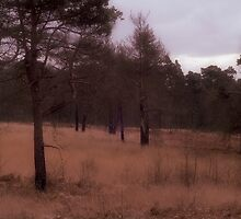 Ashdown Forest 2, West Sussex, England by Avalinart