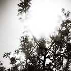 Apple Tree Sunburst by debsdesigns