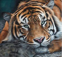 'Sumatran Tiger - Intensity' by Marie-Claire Colyer