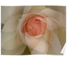 Petals - JUSTART © Poster