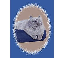 Bayou - A Portrait of a Himalayan Cat  Photographic Print