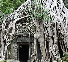Wild Roots - Ta Prohm, Angkor, Cambodia by shoelock