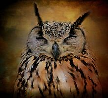Sleeping European owl by missmoneypenny