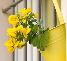yellow flowers on the balcony by spetenfia
