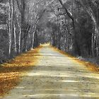The Yellow Dirt Road by Sharon Woerner