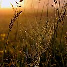 field of golden webs by irishgirl7