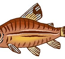 Brown Catfish by kwg2200