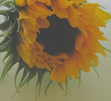 Sunflower Soft.. by NaturesTouch