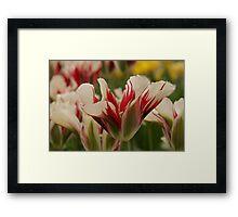 Mountain Flower - JUSTART © Framed Print