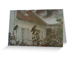 Stubborn Sparrows Greeting Card
