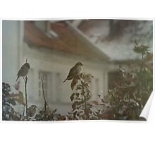 Stubborn Sparrows Poster