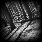 Alone in the Woods by Stephanie Bynum