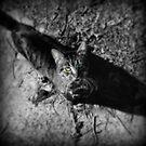 Here Kitty Kitty by Stephanie Bynum