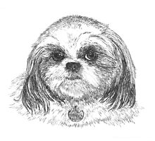 Shih-Tzu by Stephany Elsworth