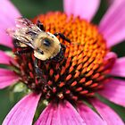 Not The Bees!!! by Keala