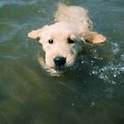 First Swim - Joey by goldnzrule